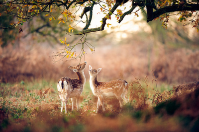 adorable, amazing, animal, animals, awesome, beautiful, cute, deer, deers, landscae, nature, place, pretty