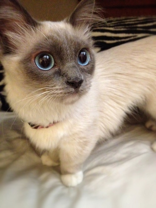 adorable, animal, animals, beautiful, beauty, cat, cats, cute, kitten, kittens, life, photo, photography, sweet