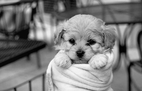 adorable, aww, b&w, babe, baby, black and white, blanket, children, dog, eye, eyes, kid, love, lovely, mug, puppies, puppy, smile, sweet