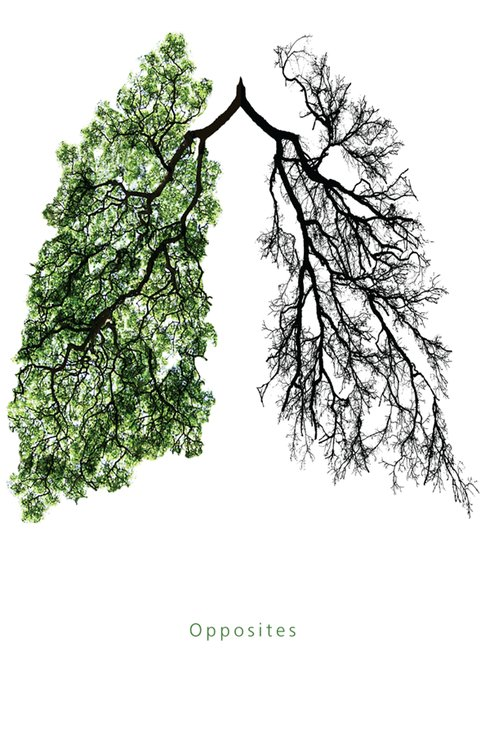 alive, black, branch, branches, death, die, difference, drawing, green, grey, illustration, live, liver, look, lung, nature, opposite, opposites, rethink, tree, trees