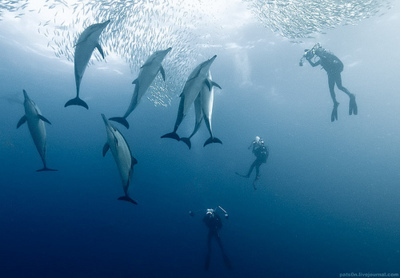 amazing, animal, animals, awesome, beautiful, blue, dolphin, dolphins, fish, landscape, nature, people, place, underwater