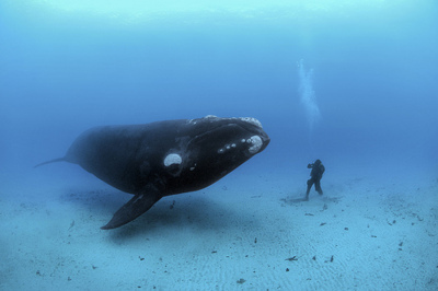 amazing, animal, animals, awesome, beautiful, blue, landscape, nature, people, place, underwater, whale