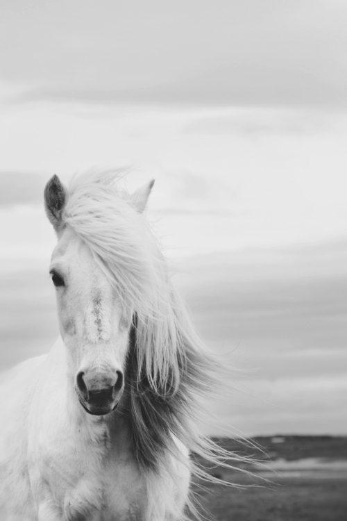 animal, aw, beautiful, black and white, cute, horse, love, majestic