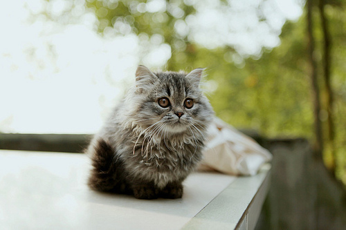 animal, aww, beautiful, bokeh