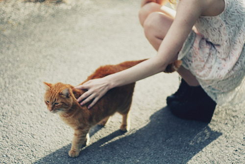 animal, beatiful, cat, cool, cute, dress, fashion, funny, gato, girl, lovely, perfect, photo, photography, pretty, shoes, vintage