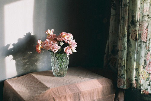 animal, beautiful, beauty, effect, floral, flower, flowers, friends, girl, grain, jar, love, music, nature, nice, noise, old, passion, photography, pink, pixelate, plants, pretty, reason, silence, sunlight, vintage