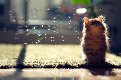 animal, bubbles, cat, cute