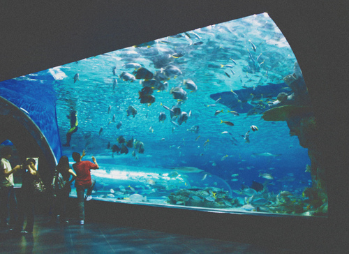 Awesome Aquariums 5 Cool Modern Fish Tank Designs Pictures to pin on ...
