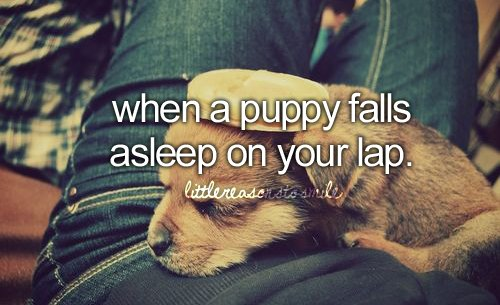asleep, aww, cute, dog, falls, lap, little things, puppies, puppy, shit i love, sweet, when