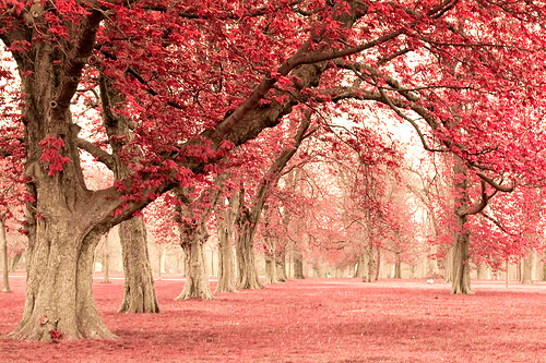 autumn, beautiful, flowers, forrest, landscape, leaves, nature, photography, pink, pinky, tree