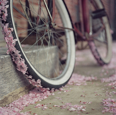 avenue, beautiful, bike, blossom, danboo, drive, flowers, girl, leaves, love, lovely, nature, nice, photography, pink, pretty, ride, spring, street, summer