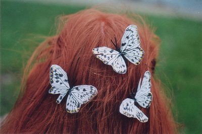 beautiful, butterflies, butterfly, cute