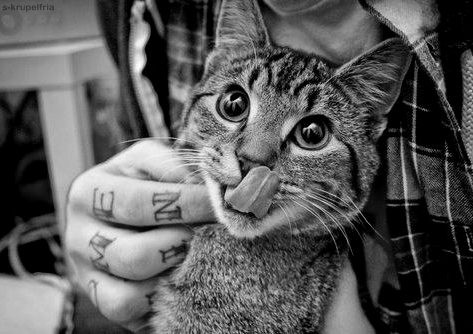 black and white, cat, cute, guy