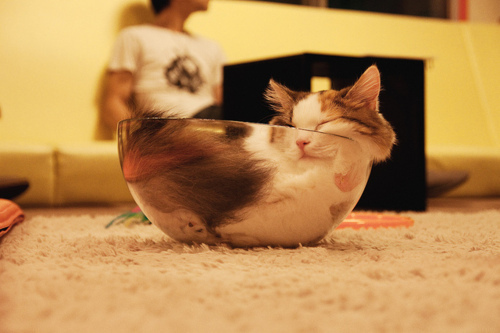 bowl, cat, cute, sleepy