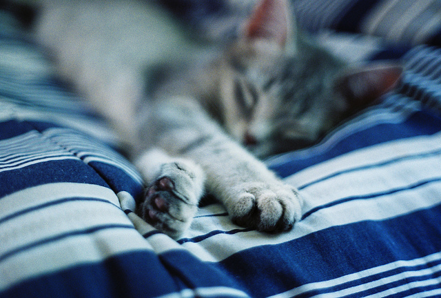 cat, cute, kitty, sleepy