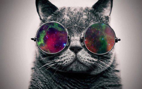cat, glasses, hipster