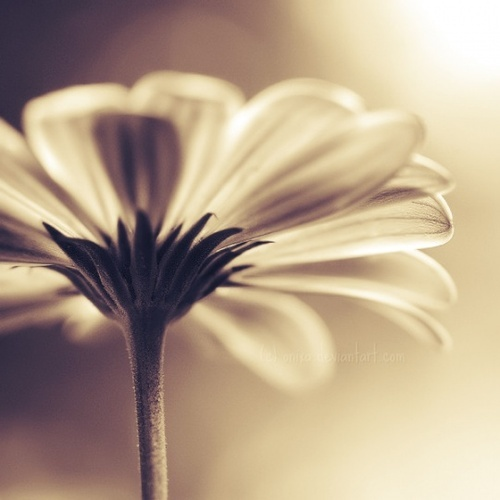 flower, photography