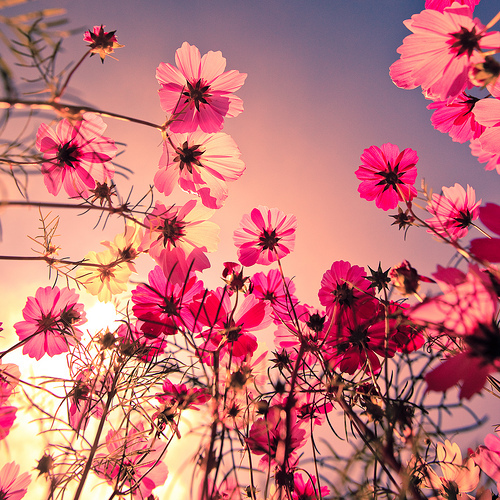 flowers, photography, pink, pretty - image #512291 on ...