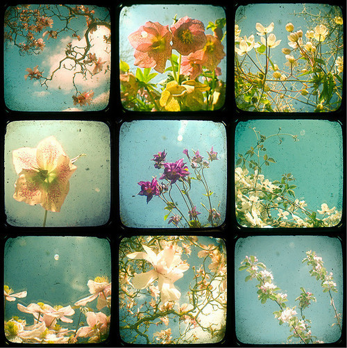 flowers, romantic, spring and summer
