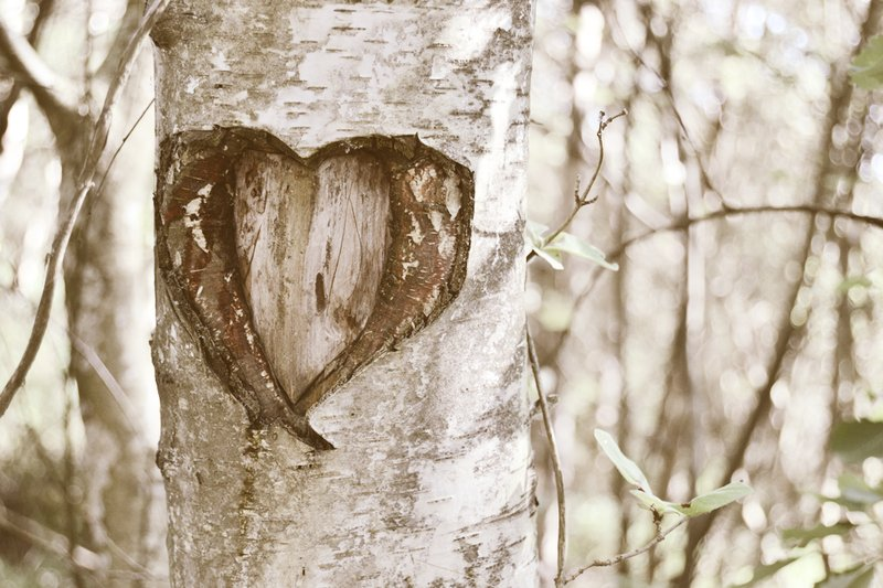 heart, inspo, love, nature