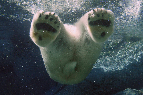polar bear, bear, cool, cute