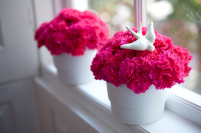 adorable, amazing, awesome, beautiful, beauty, bird, cool, cute, flower, flowers, gorgeous, home, photo, photograph, photography, pink