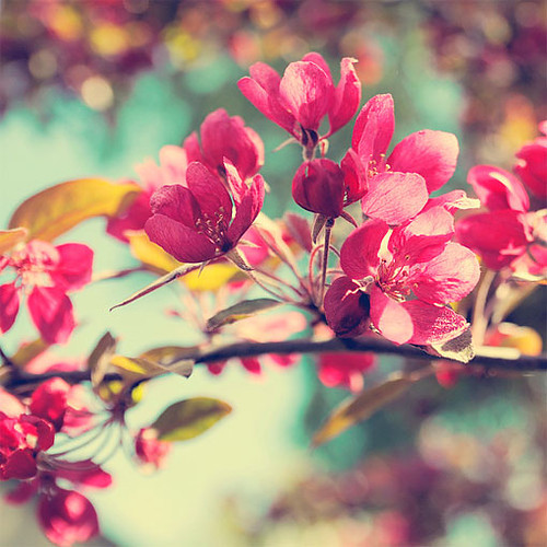 amazing, beautiful, cute, flower, flowers, photo, photography, pink, pretty, red