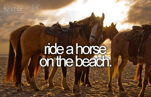 animal, beach, before i die, horse