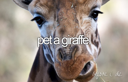 animal, before i die, cute, giraffe