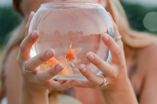 animal, cute, fish, fishes