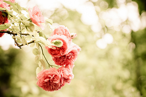 art, fashion, flower, flowers, nature, pastel, pink, rose, vintage