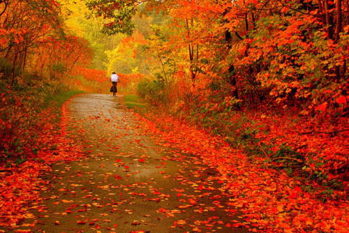 Autumn awesome beautiful colors fall fantastic forest gorgeous