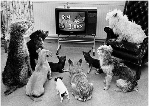 black and white, cartoon, dogs, tom and jerry, tv