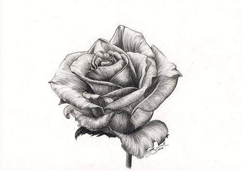 Black cool drawn gray image 622749 on for Cool rose drawings
