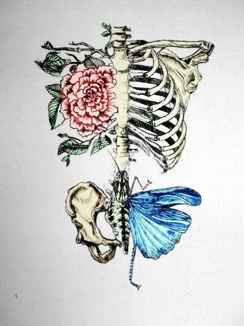 blue, butterfly, drawing, pink, rose, skeleton