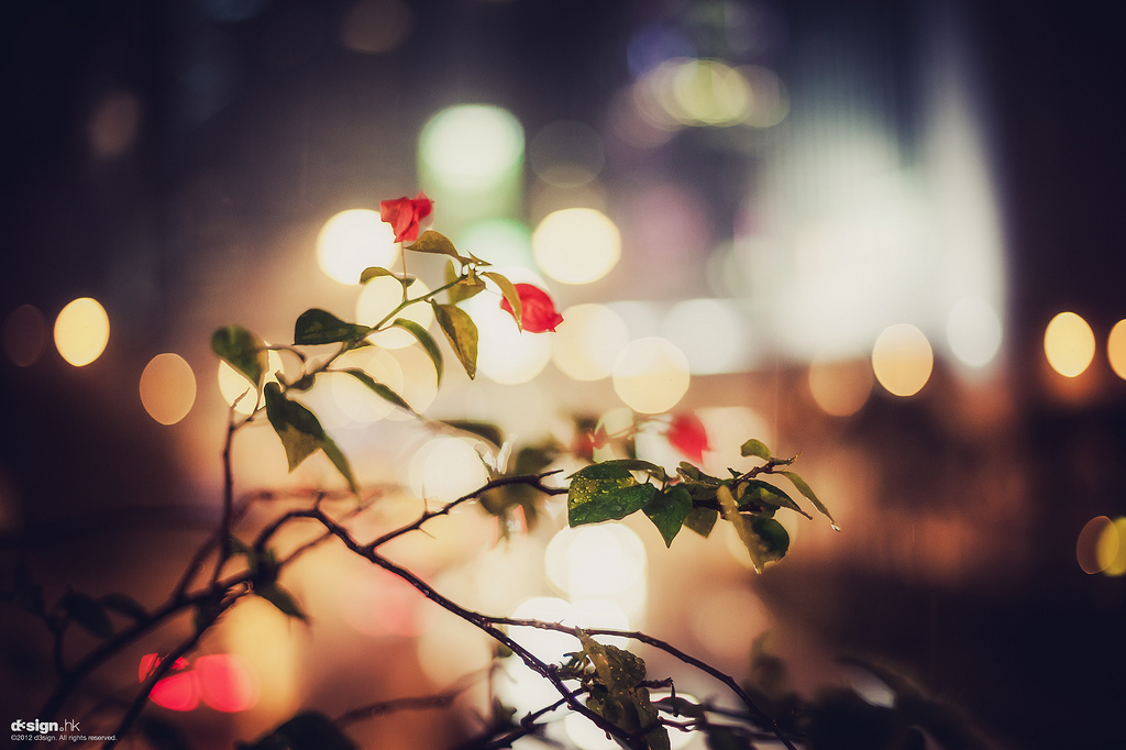 bokeh, flowers, photography