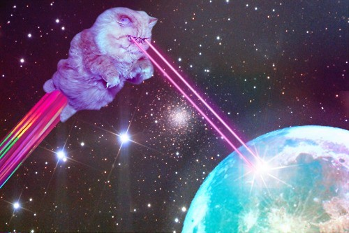cat, galaxy, haha, photo