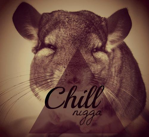 chinchilla, adorable, animal, chill