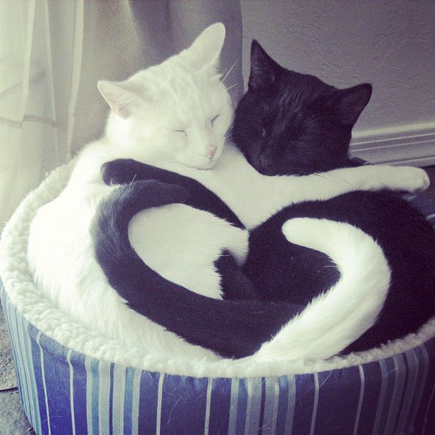 cute, cates, love, sweet, valentines