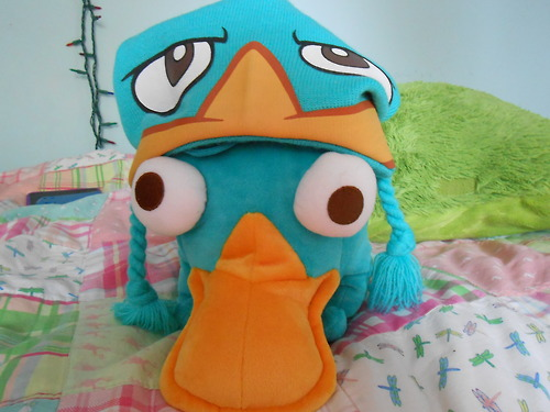 cute, disney, hat and perry