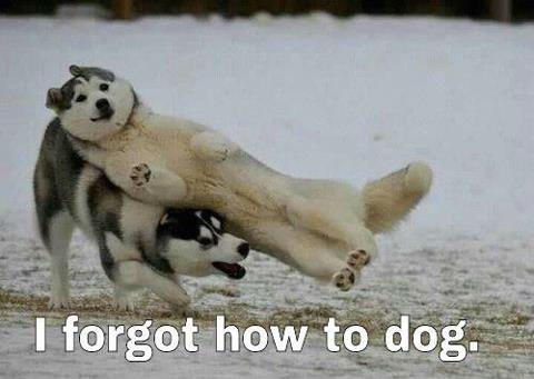 dogs, funny, cute, lol
