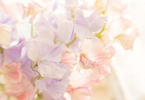 flowers, pastel, pastel picture, pink, romantic, romantic picture, sweet