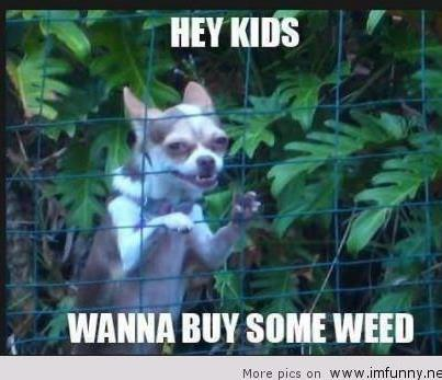 funny animals, funny easter, funny kids, funny pictures, - image ...