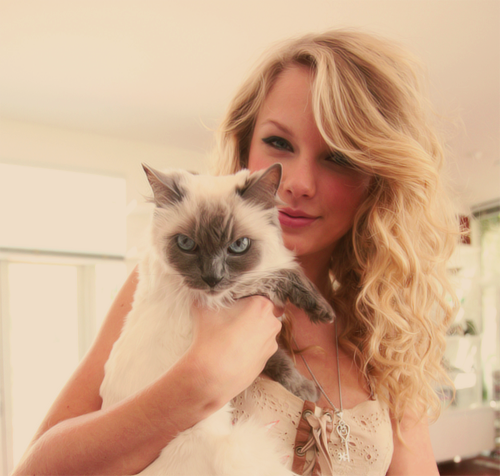 cat, taylor swift