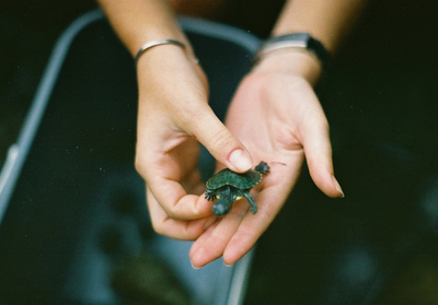 adorable, animals, beautiful, cute, girl, girls, life, little, love, nice, turtle, turtles, woman