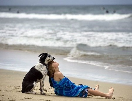 amazing, animals, beach, dog, friends, love, ocean, photography