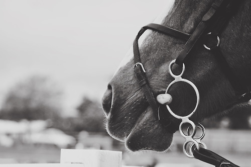 animal, beautiful, black, black and white, equestrian, horse, love, lovely, nice, nose, pastel, pretty, ride, vintage, white