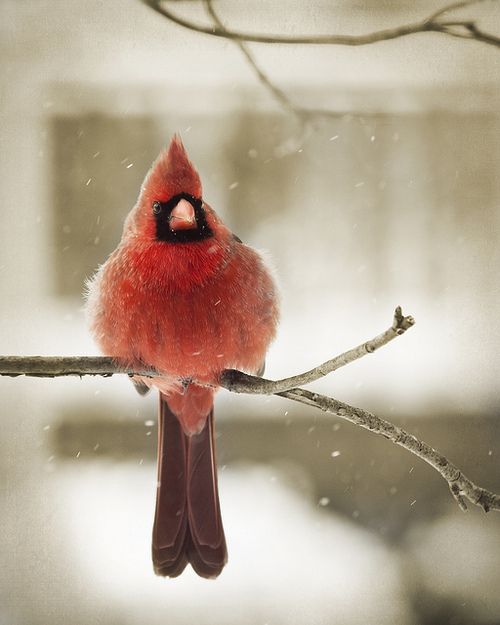 animal, beutiful, birs, cute, free, freedom, love, nature, peace, red, tree, wild