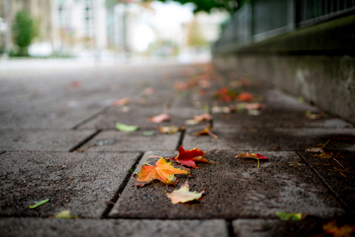 autumn, beauitful, cute, fall, landscape, leaf, leaves, nature, photography, street
