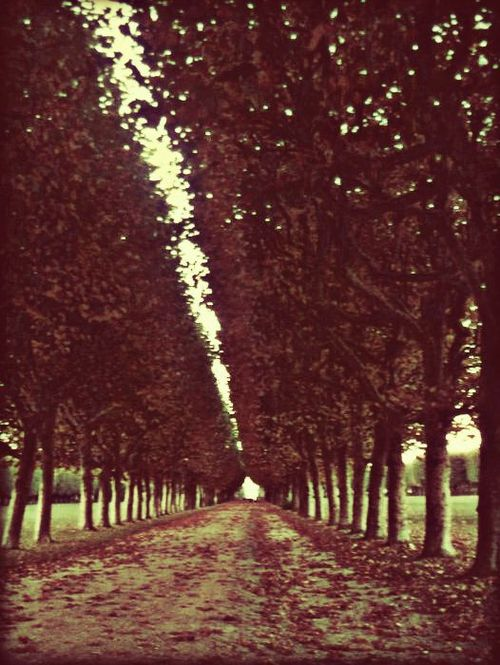 autumn, beautiful, fall, france, garden, infinity, natural, nature, park, trees, vintage